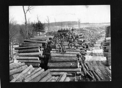 Logging, lumbering