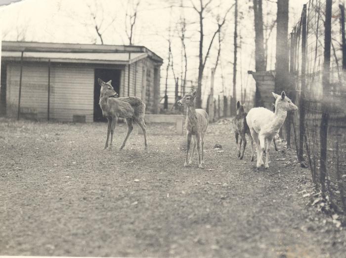 John Ball Park Zoo animals