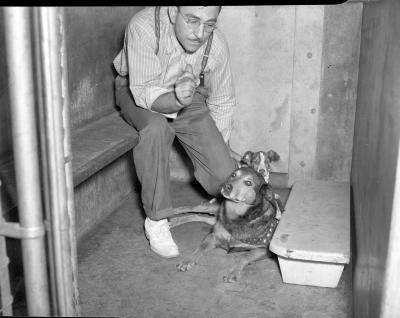 Animal Shelter, two dogs