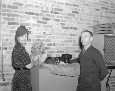 Animal Shelter, lady with pups