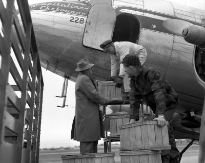 Apples, Being shipped by air